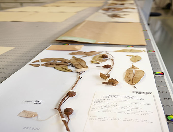 Klantcase Naturalis digitaliseren Herbaria
