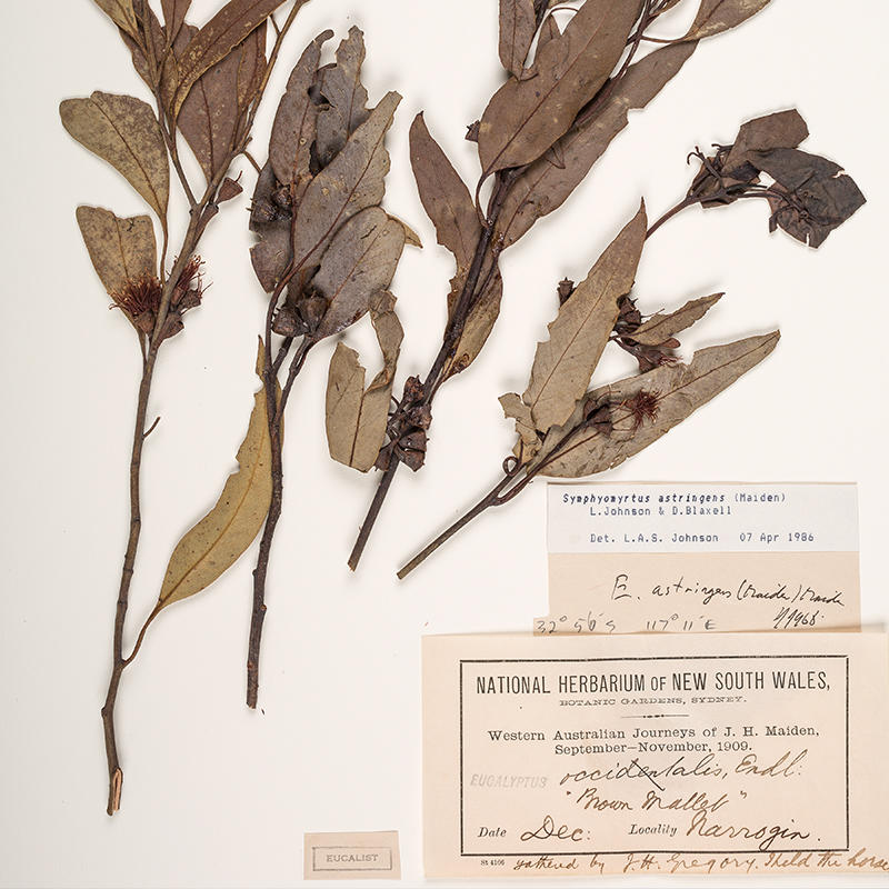 Digitalisation of National Herbarium of NSW Collection
