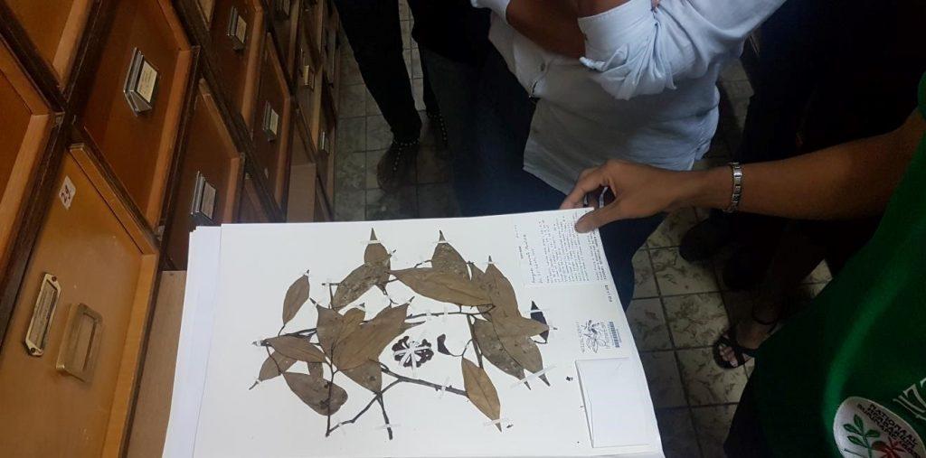 Herbarium Plantendata Surinaams Archief
